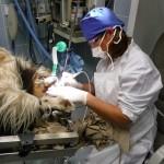 Maulhöhlensanierung mit Ultraschall